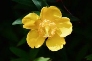 flores bach comunicar introvertidos