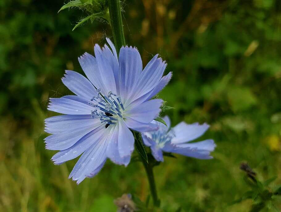 flores bach dependencia emocional