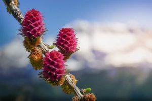 flores bach larch autoestima